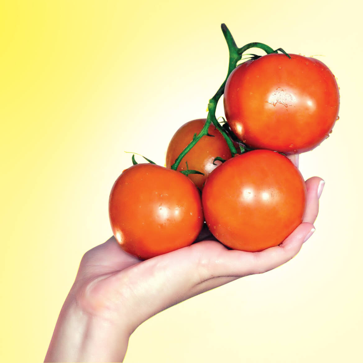 Flower Pot Tomatoes S/3-370156
